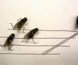 flies, fly, and art image
