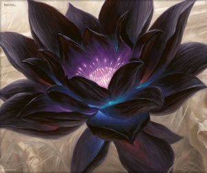 drawing, lotus, and flower image