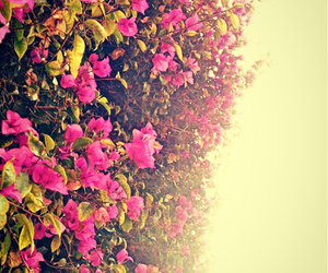 background, flowers, and pink image