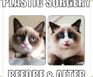 cat and plastic surgery image