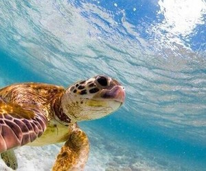 turtle, water, and ocean image