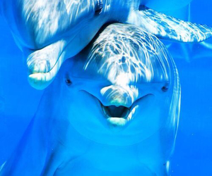 dolphin, animals, and blue image