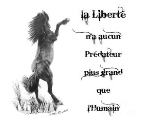 cheval, french, and quote image