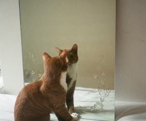 cat, mirror, and reflection image