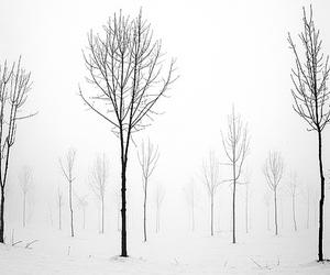 tree, snow, and white image