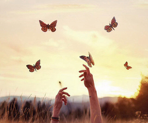 butterfly and sunset image