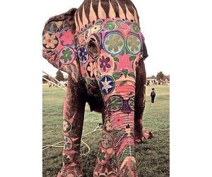 elephant<3 image