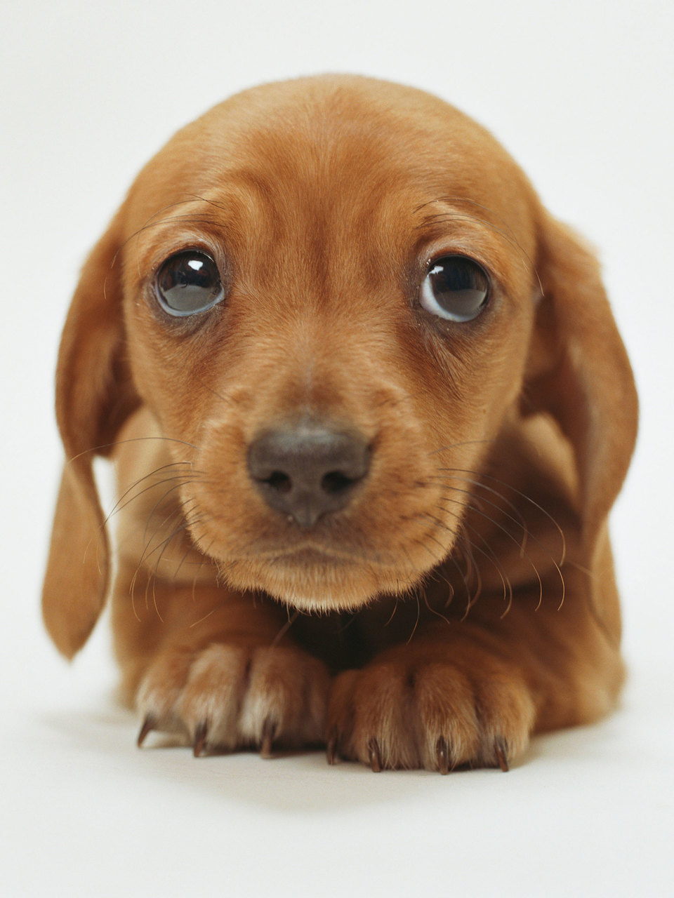 sad puppy face - Google Search on We Heart It