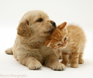 cats, cute animals, and dogs image