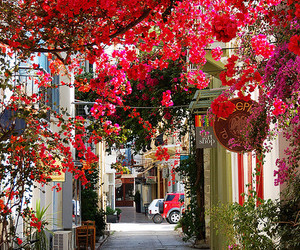 flowers, Greece, and red image