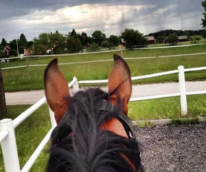 amazing, clouds, and horse image