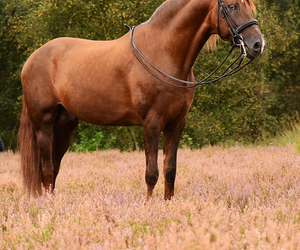 beautiful and horse image