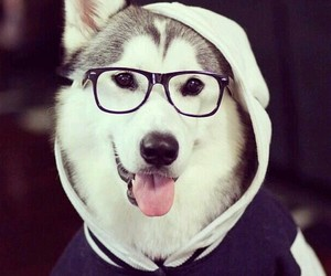 dogs, woof, and cute image