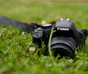 camera, grass, and summer image