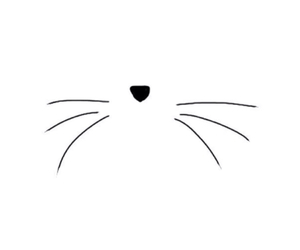 background, cat, and nose image