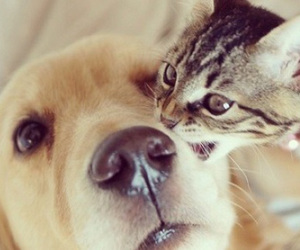 adorable, animals, and bff image