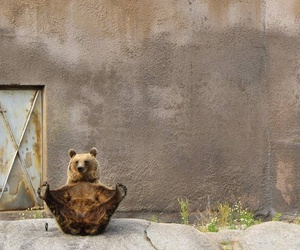 bear and yoga image