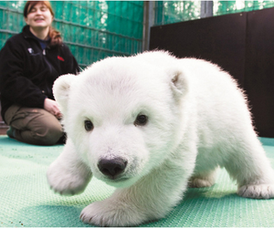 cute, Polar Bear, and animal image