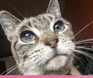 cats, cute animals, and kittens image