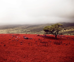 hawaii, nature, and red image