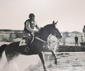 animals, black and white, and equestrian image