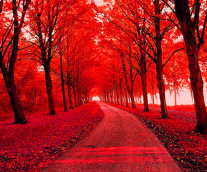 autumn, tree, and red image