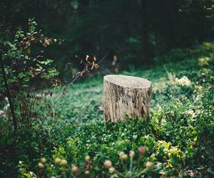 flowers, forest, and indie image