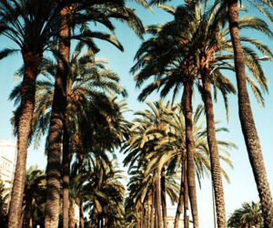 summer, palms, and palm trees image