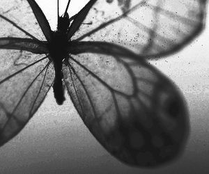 beautiful, black and white, and monochrome image