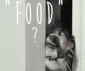 cat, food, and ineedsit image