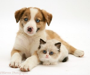 cats, cute animals, and puppy image