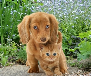 kitten, puppy, and dog image