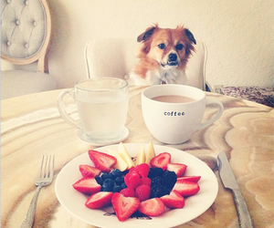 dog and breakfast image