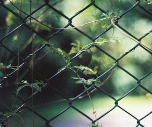 green, photography, and cage image