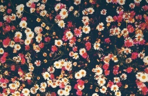 Flowers Tumblr Shared By Anna On We Heart It