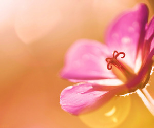 background, beautiful, and blossom image