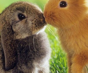 animals, background, and cute image