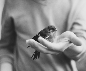bird, animal, and indie image