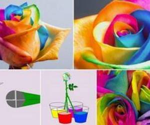 rose, diy, and flowers image