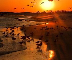 birds and sunset image