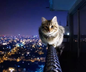 cat, city, and night image