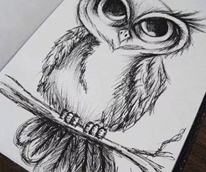 owl, desenho, and draw image