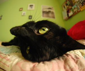 cat, photography, and fish eye image