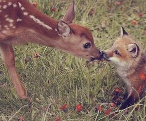 fox, cute, and animal image