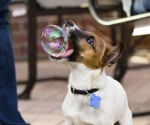 dog, bubbles, and funny image