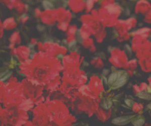flowers, header, and red image