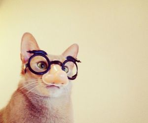 animal, funny, and cat image