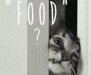cat, comic, and food image