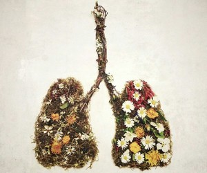 flowers, nature, and lungs image