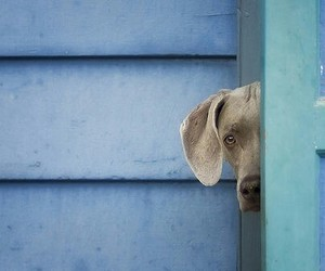 blue, dog, and puppy image